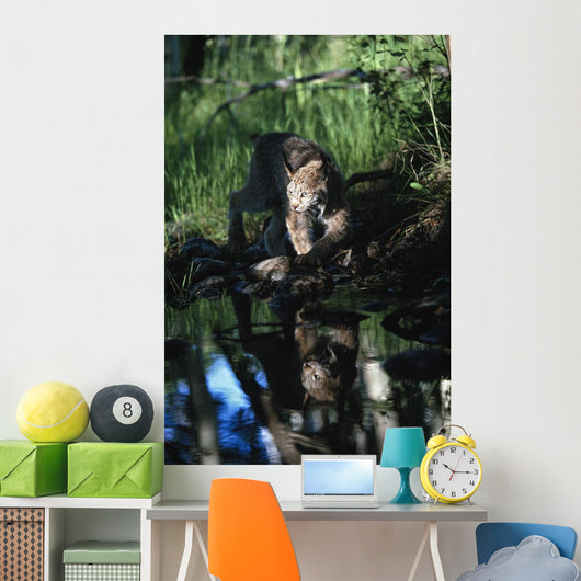 Reflection Of Lynx In Stream Wall Mural