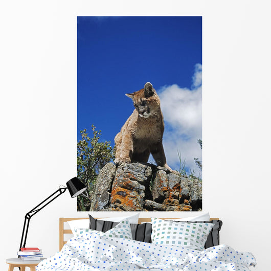 Young Mountain Lion Looks Down From Rock Outcrop Wall Mural
