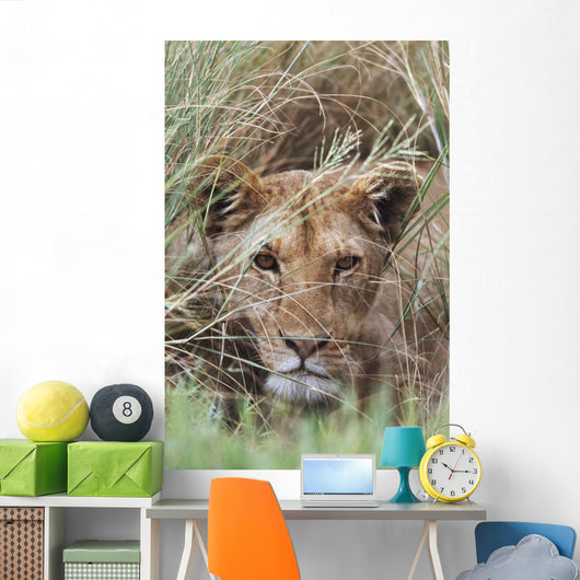 Lioness Peering Through Grass, Africa Wall Mural