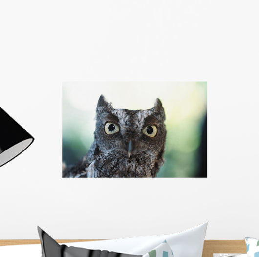 Eastern Screech Owl Portrait Showing Large Eyes Wall Mural