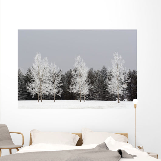 Frost On Trees, Calgary, Alberta, Canada Wall Mural