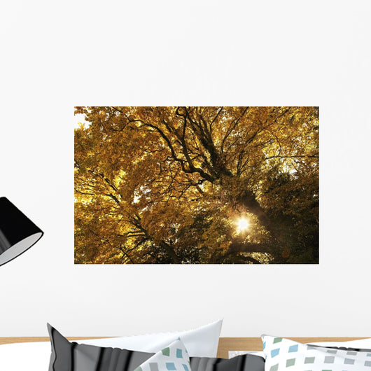 Sun Shining Through Golden Leaves On A Tree Wall Mural