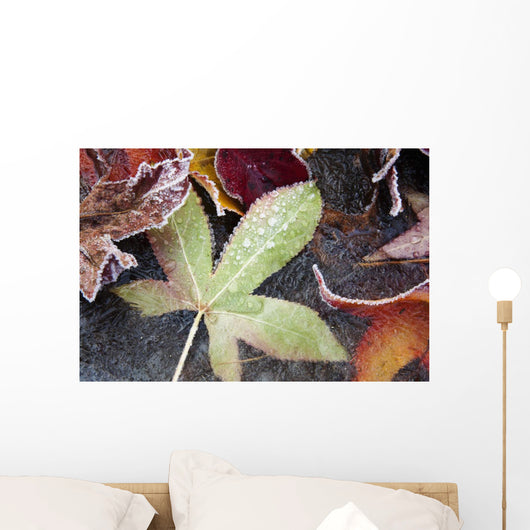 Autumn Colored Leaves Frozen In A Creek Wall Mural