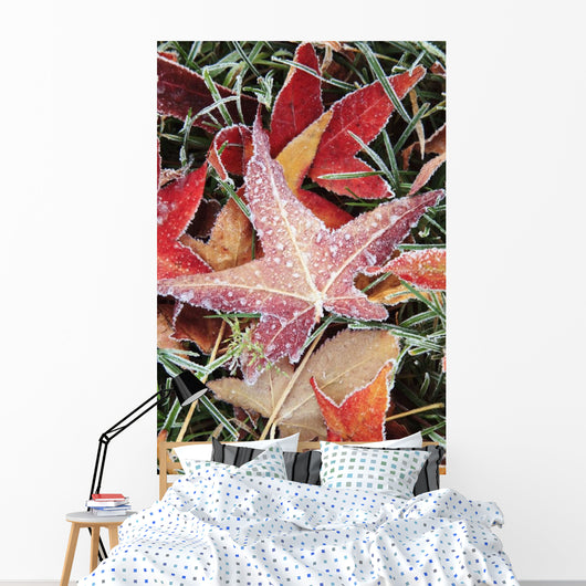 Fall Colored Leaves Covered In Frost Wall Mural