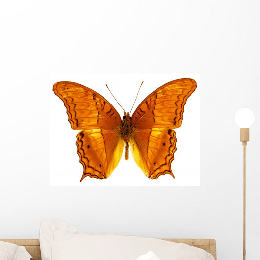 Colorful Exotic Butterfly Wall Decal