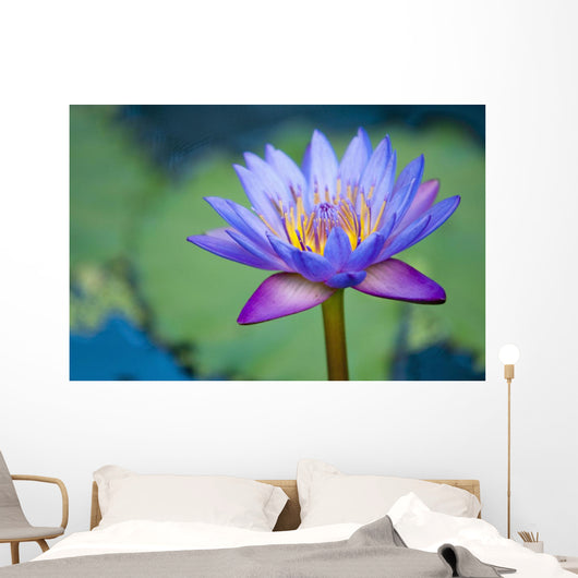 A Lotus Flower Wall Mural