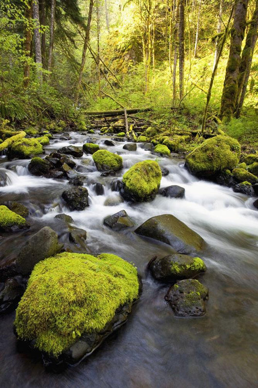 Water Flowing By Moss Covered Rocks In A Stream Wall Mural