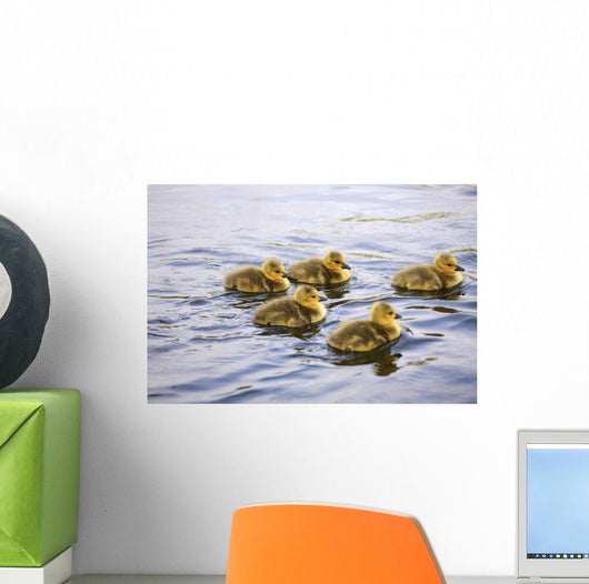 Five Goslings In The Water Wall Mural