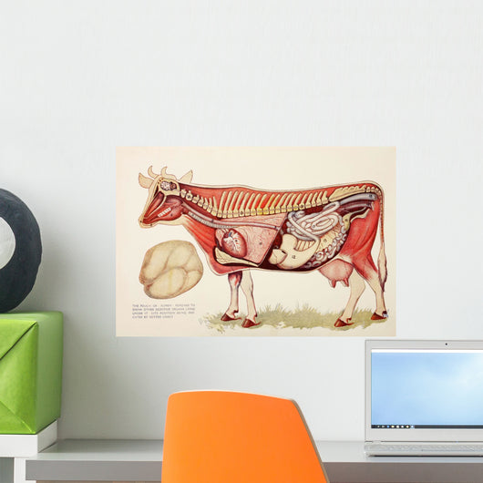 Internal Organs Of A Cow Wall Mural