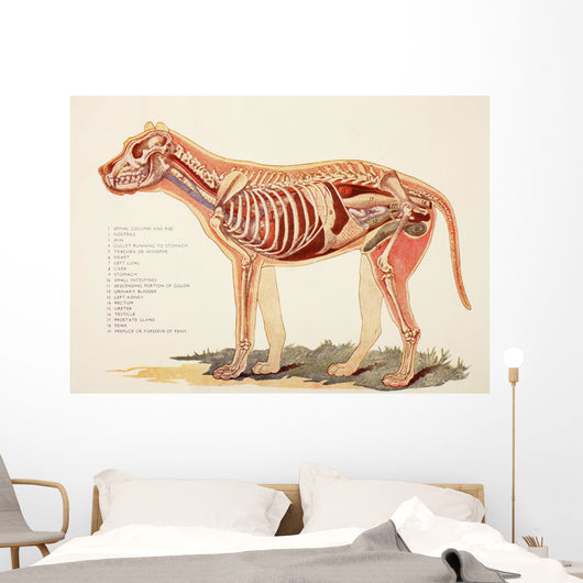 Internal Organs Of A Male Dog Wall Mural