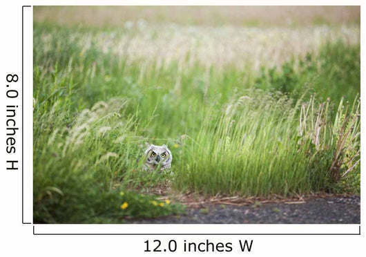 Owl In The Grass Wall Mural