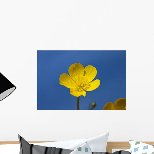 A Yellow Buttercup Against A Blue Sky Wall Mural