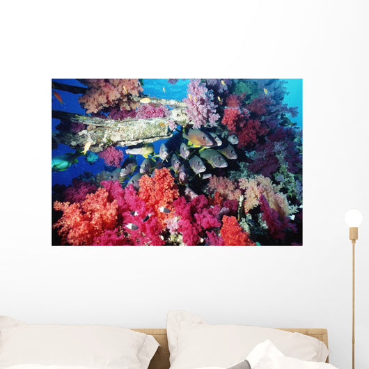 Fish And Colourful Corals Wall Mural