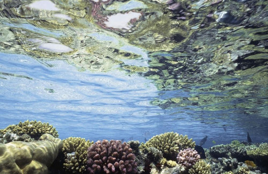 View Of Coral In Shallow Waters Wall Mural