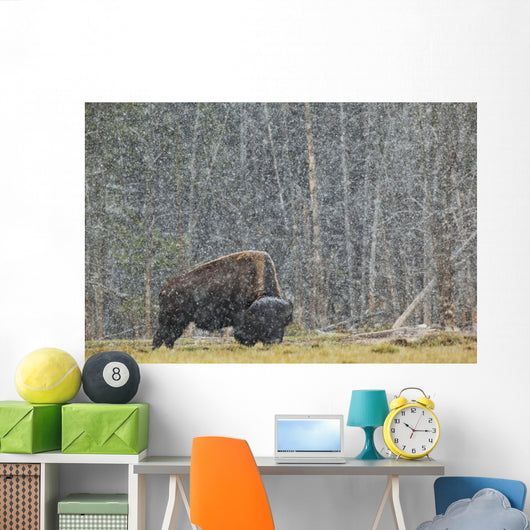 A Buffalo In Lamar Valley In Yellowstone National Park Wall Mural