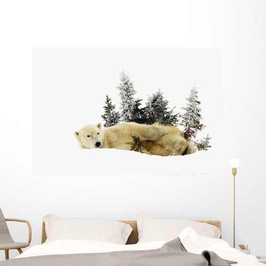 A Polar Bear Photographed At Wapusk National Park Wall Mural