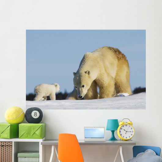 Mother Polar Bear Playing With Her Cub In Wapusk National Park Wall Mural