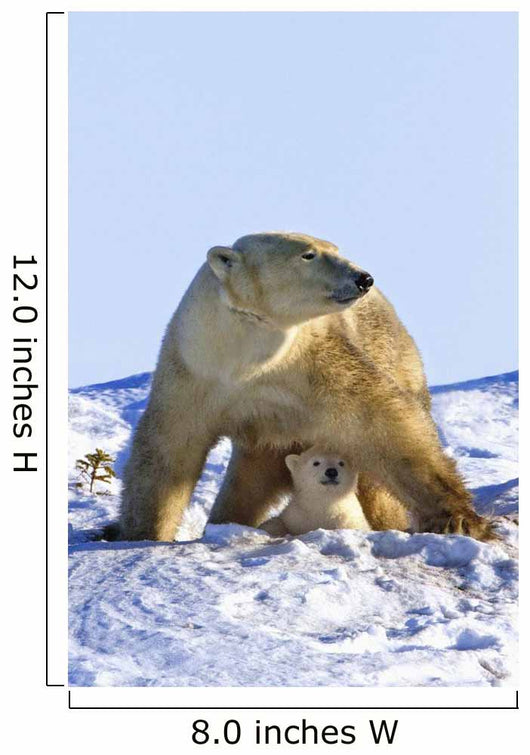 A Mother Polar Bear With Her Cub In Wapusk National Park Wall Mural