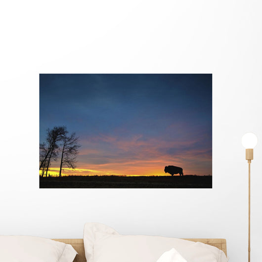 Buffalo At Sunset In Elk Island National Park Wall Mural