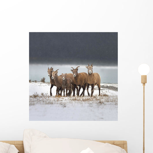 Mountain Sheep Family Wall Mural