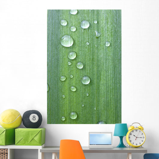 Drops Of Water On A Green Leaf Wall Mural