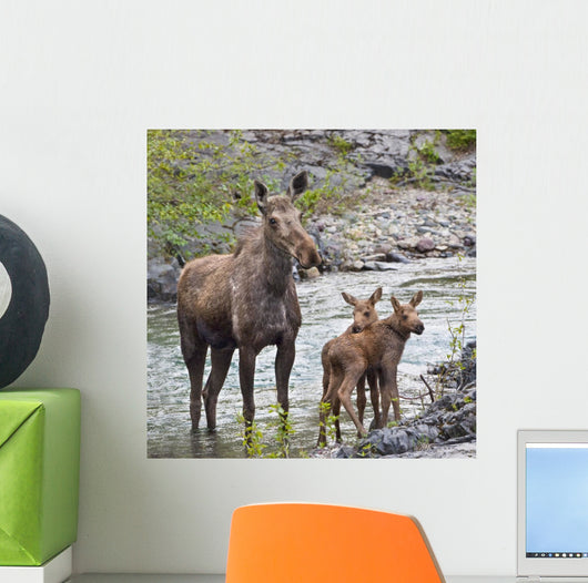 Sow Moose And Calves At Waterton National Park Wall Mural