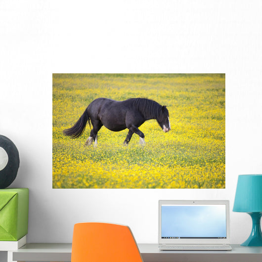 A Horse Walking In A Field Of Yellow Flowers Wall Mural