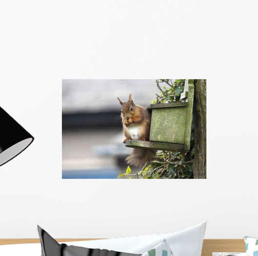 Red Squirrel Sitting On A Bird House Hung On A Tree Trunk Wall Mural