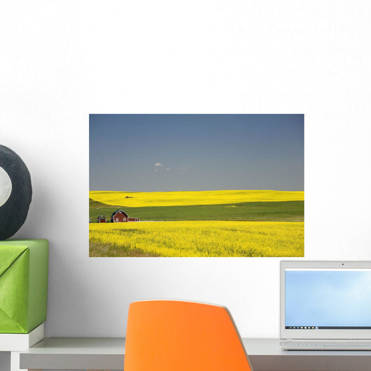 Flowering Canola Fields And A Red Barn Wall Mural