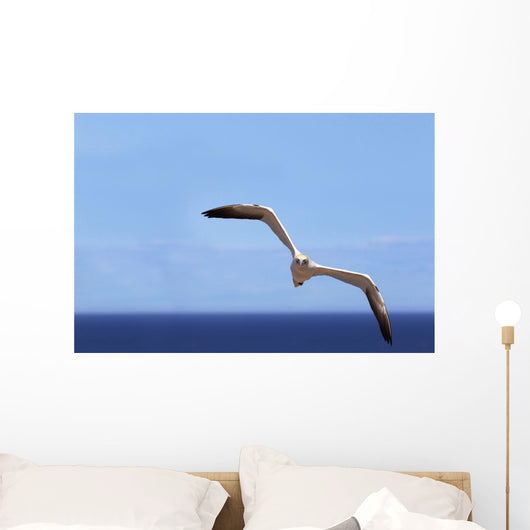 Gannet Flying Over The Water Wall Mural
