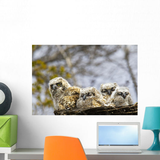 Two Gannets Interacting Wall Decal