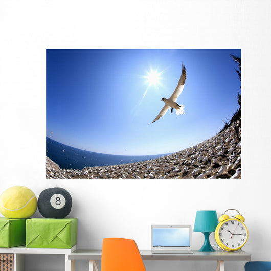 Gannet Flying On A Journey To Find His Mate At Bonaventure Island Wall Mural