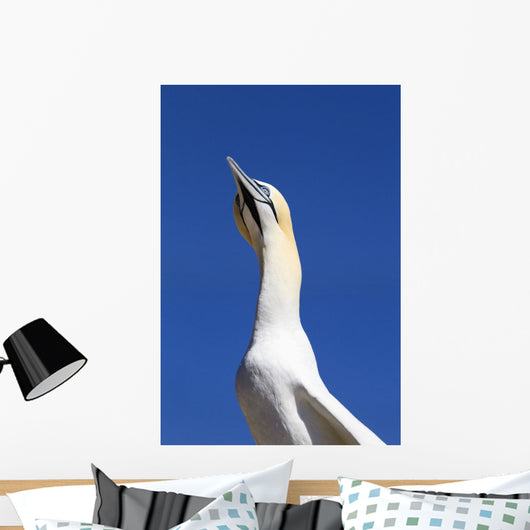 A Single Gannet Searches The Sky For Her Mate On Bonaventure Island Wall Mural
