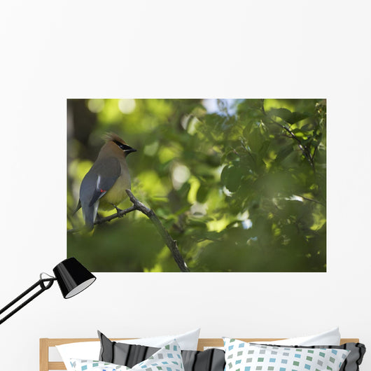 Cedar Waxwing On A Tree Branch Wall Mural