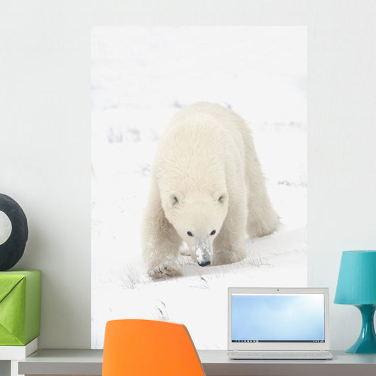 Curious Young Polar Bear Exploring Wall Mural