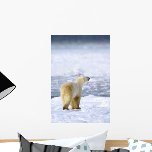 Polar Bear Sniffs The Air As He Is On The Hunt For Food Wall Mural