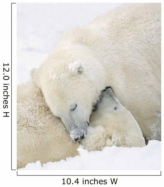 Two Polar Bears Using Each Other For Pillows As They Sleep Blissfully Wall Mural