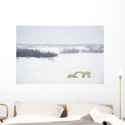 Two Polar Bears Showing Affection By Kissing Each Other Wall Mural