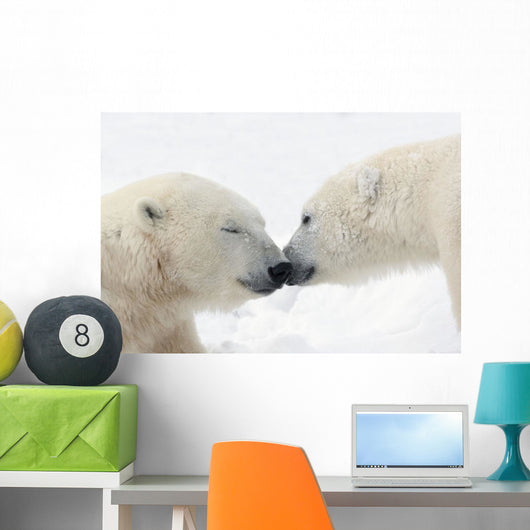 Two Polar Bears Touching Noses Or Kissing Wall Mural