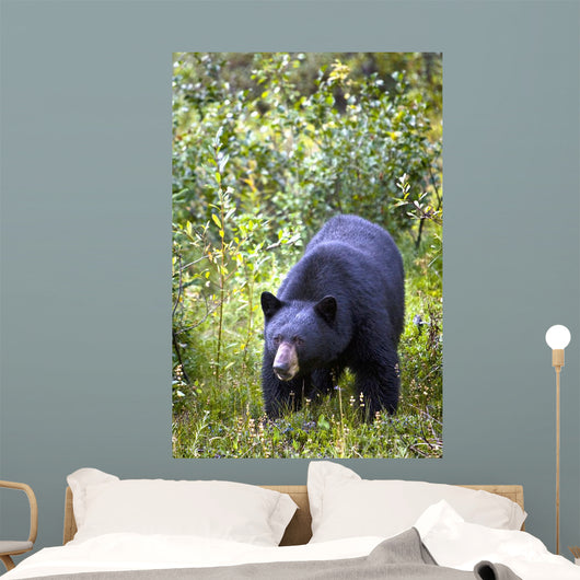A Black Bear Wall Mural