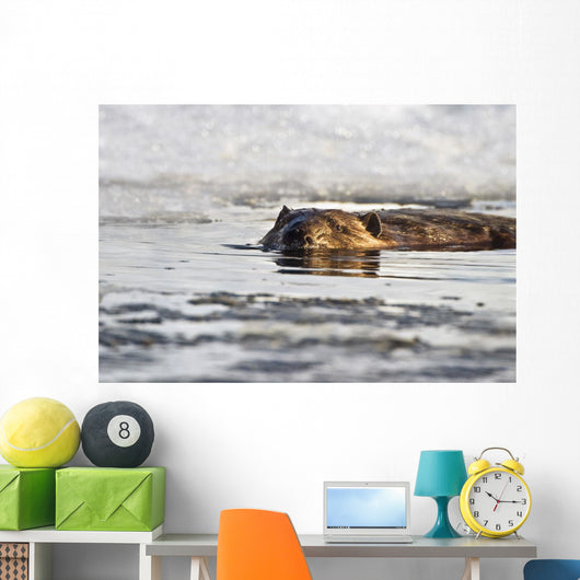 Beaver Swimming Wall Mural