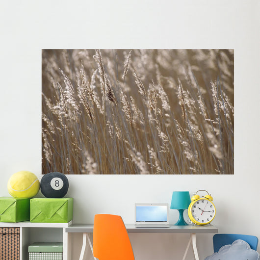 Reeds, Close Up Wall Mural