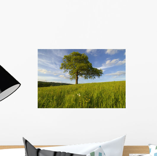 Single Oak Tree On A Hill Wall Mural