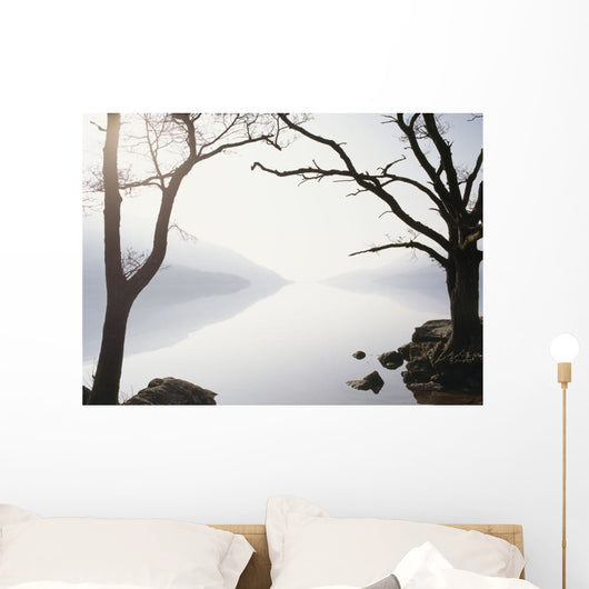 Snowy Trees with Sunrise on the Horizon Wall Mural