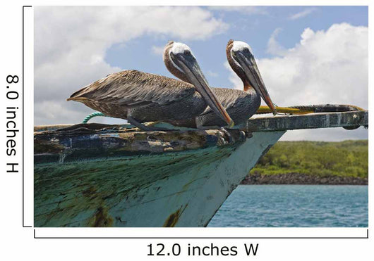 Two Pelicans On A Derelict Boat In The Harbor Wall Mural