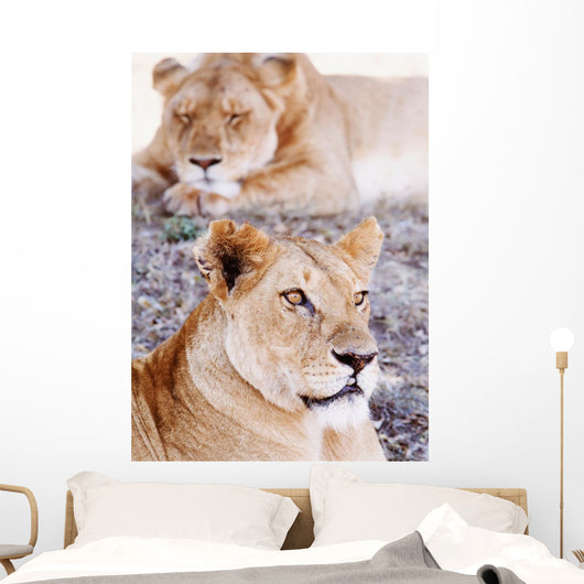 Lionesses Lying In Shade In Maasai Mara Game Reserve Wall Mural