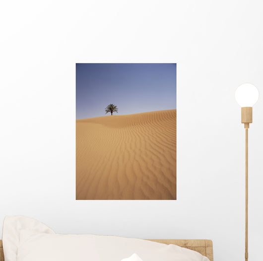 Solitary Date Palm Tree In The Sand Dunes, Tinfou Near Zagora Wall Mural