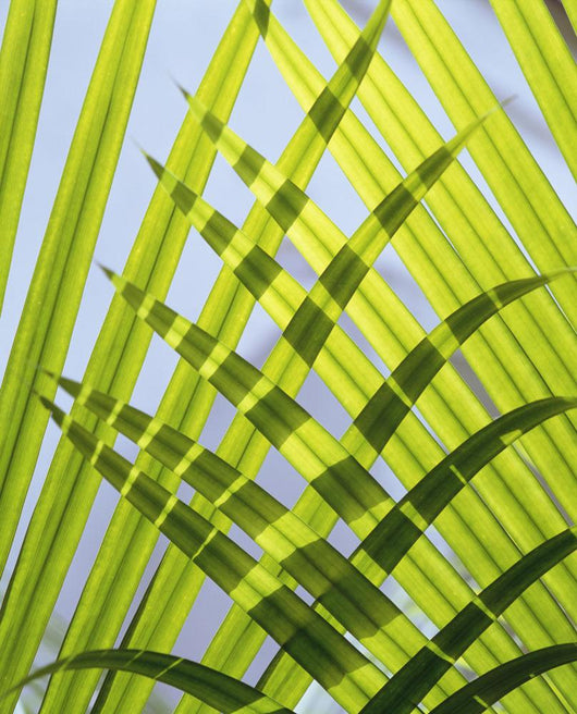 Palm Leaves, Close Up Wall Mural