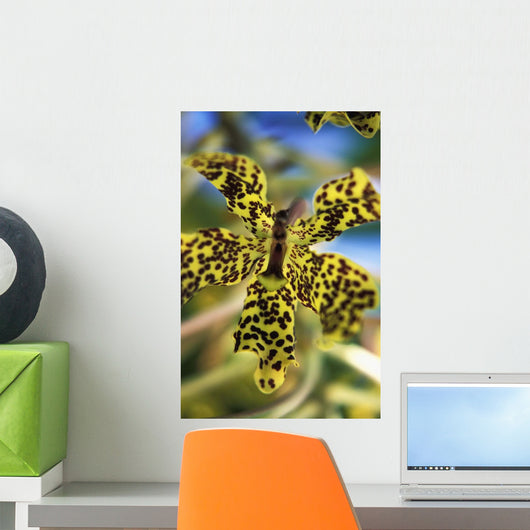 Yellow And Black Spotted Orchid Wall Mural