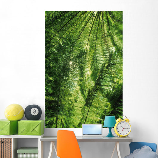Canopy Of Green Ferns Wall Mural